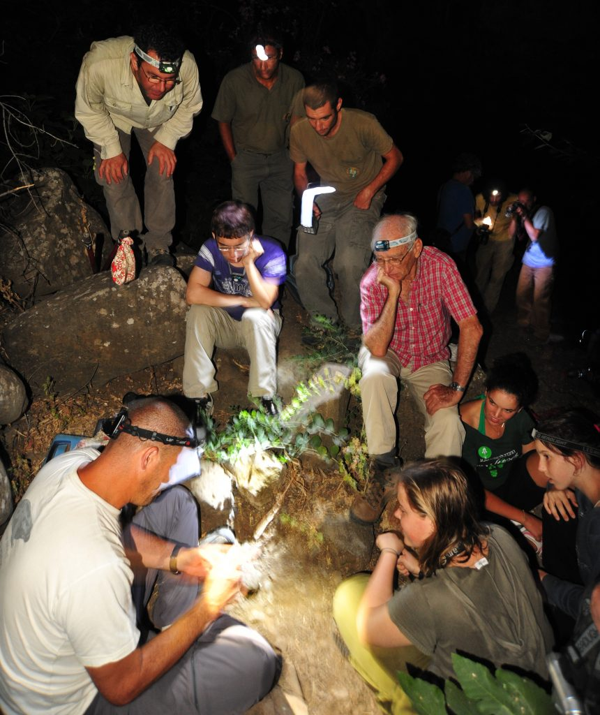 Survey of different bat species at night in Northern Israel (photo - Uri Roll)