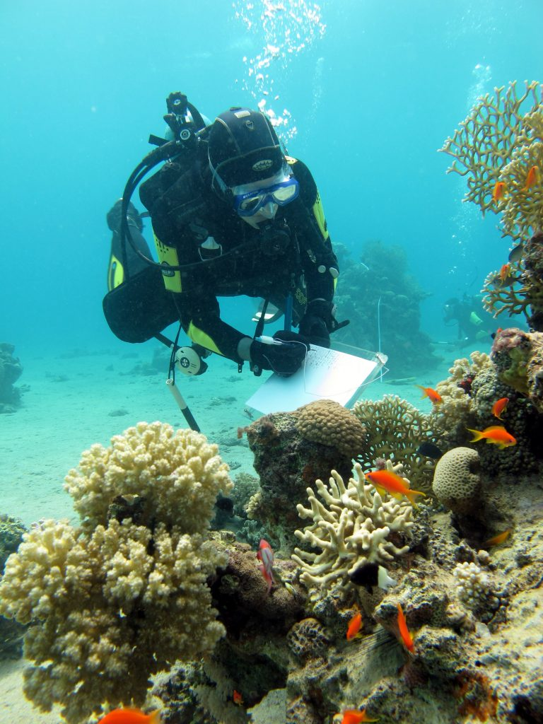 Survey on the status of the coral reef at the northern tip of the gulf of Aqaba 1 (Photo - Asaf Zvuluni)